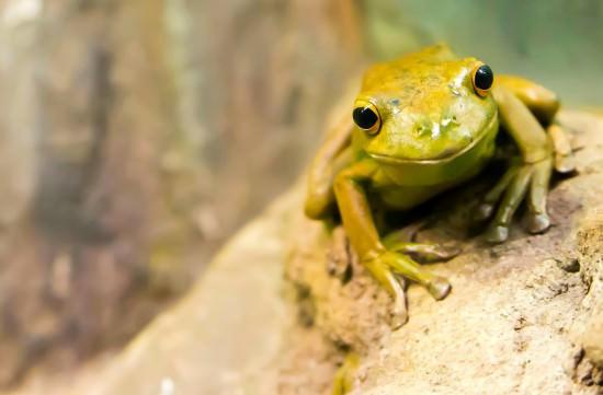 山下幸平さん 井の中の蛙
